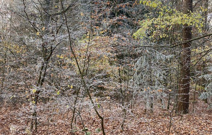 Wald / Staatsforsten Amberg